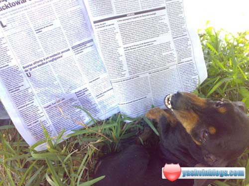 Pif reading newspaper