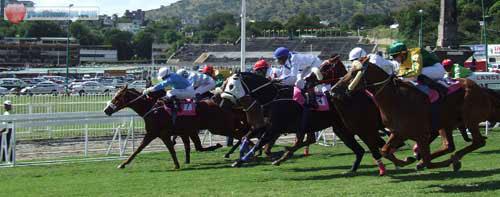 Horses at Champs de Mars