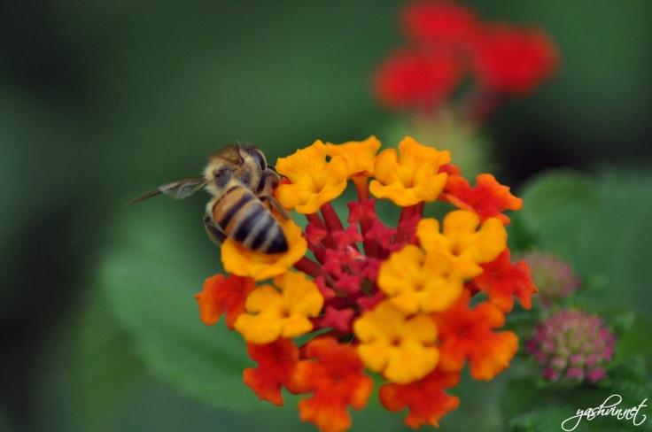 Bee in Champs de Mars