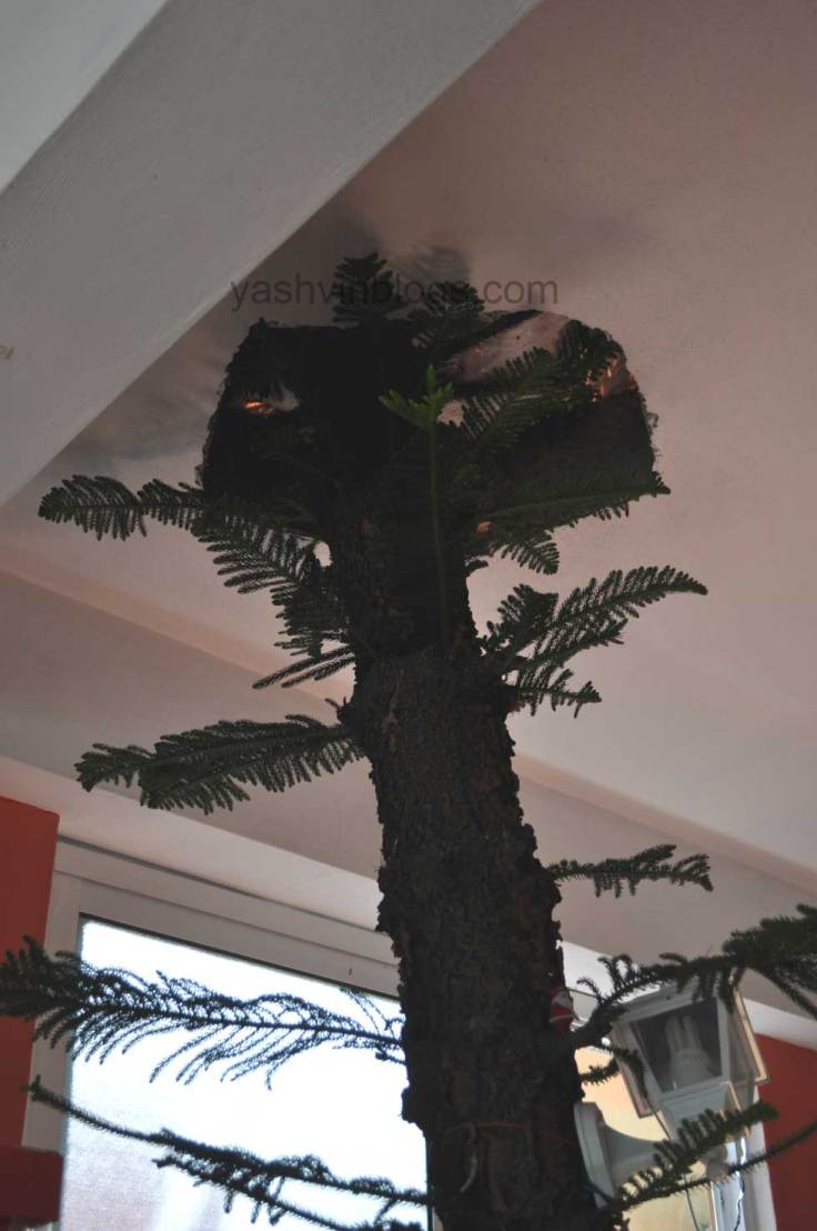 a tree into the roof