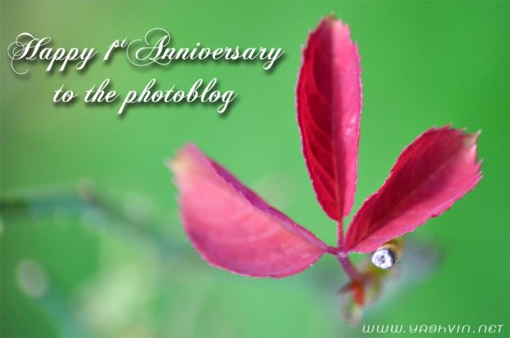 1st anniversary fotoblog