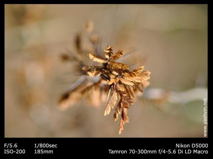 prickling leaves